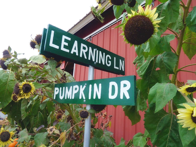 Learning Lane and Pumpkin Drive