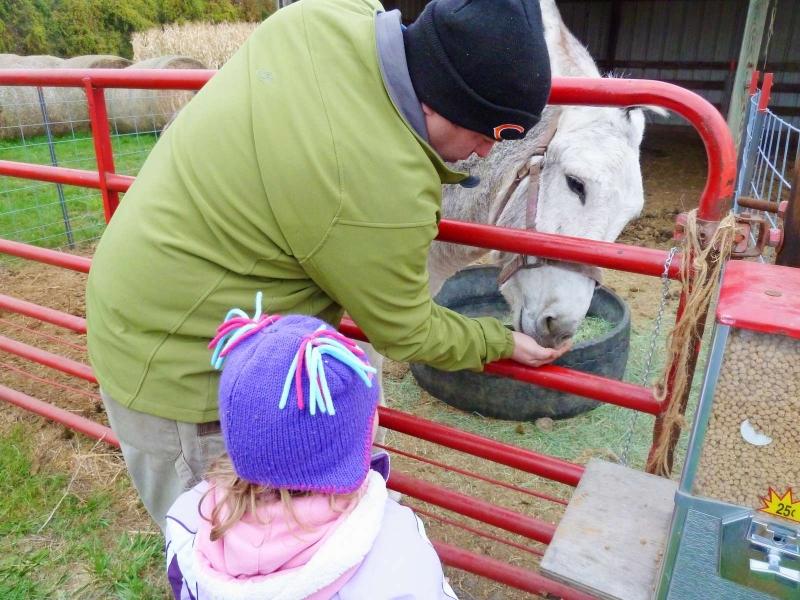 Daddy feeding the horsie
