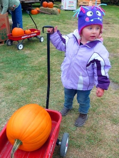 Hauling her pumpkin around