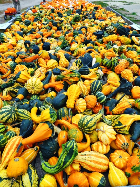 Sea of Gourds!