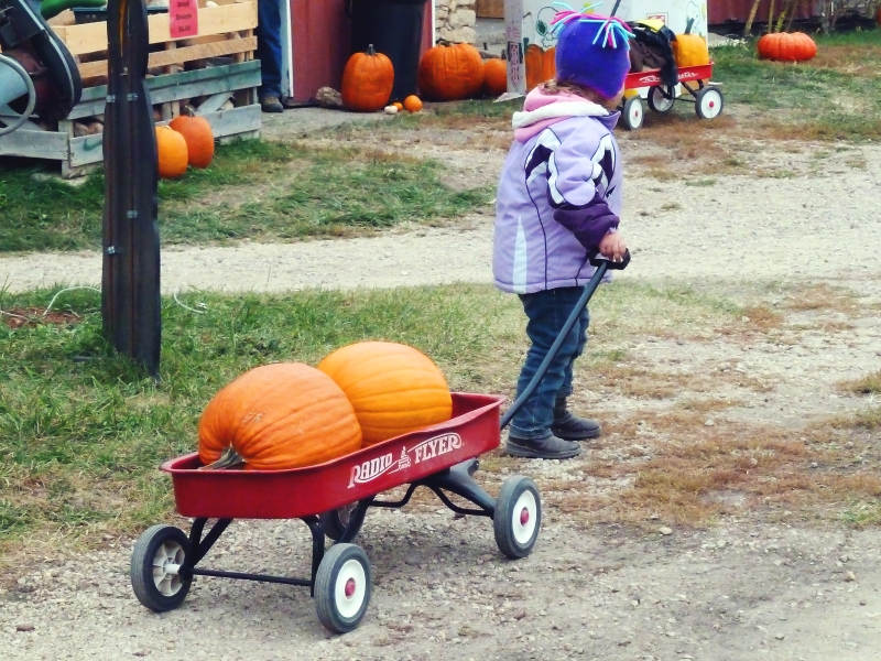 Ready to pay for the pumpkins